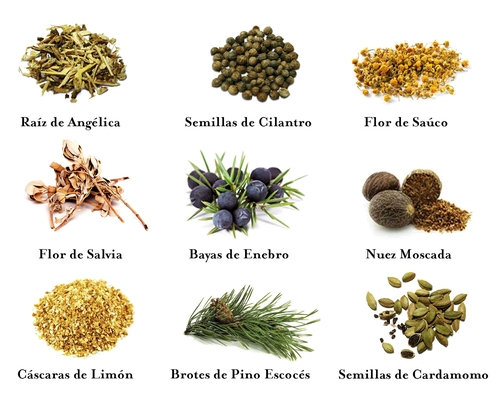 botanicals of gin